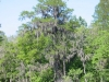 tree in moss