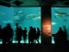 Audubon Aquarium.